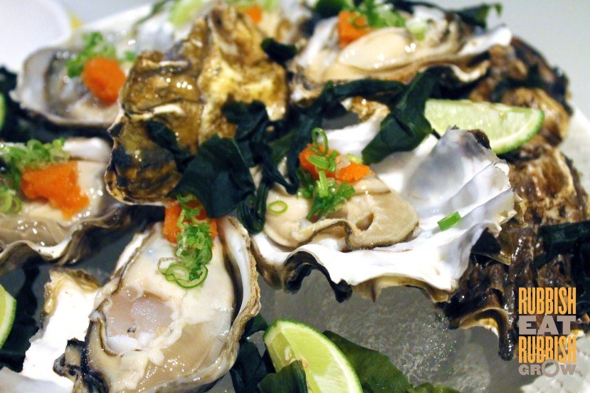 Flying squirrel - oysters