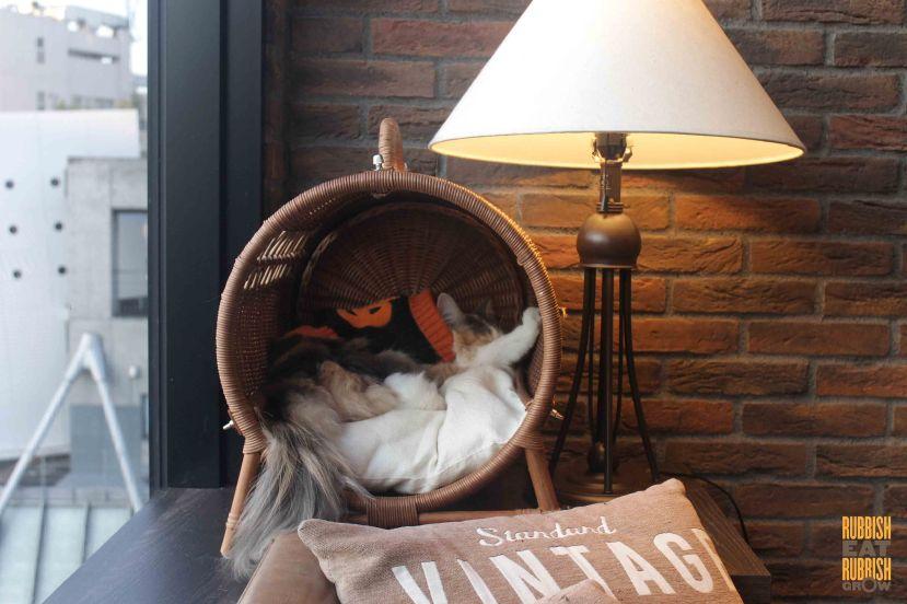 cat-cafe-mocha