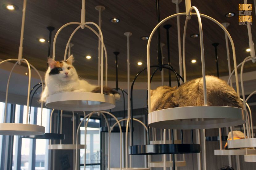 mocha-cat-cafe-tokyo