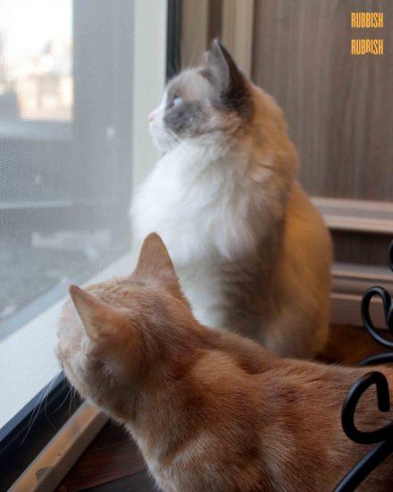 Cat Cafe 猫カフェ MoCHA