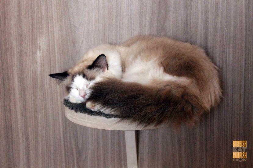 猫カフェモカ 渋谷店